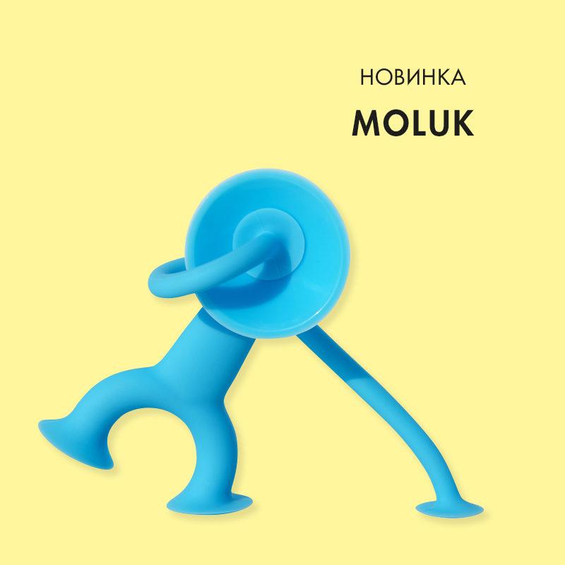 moluk_oggi